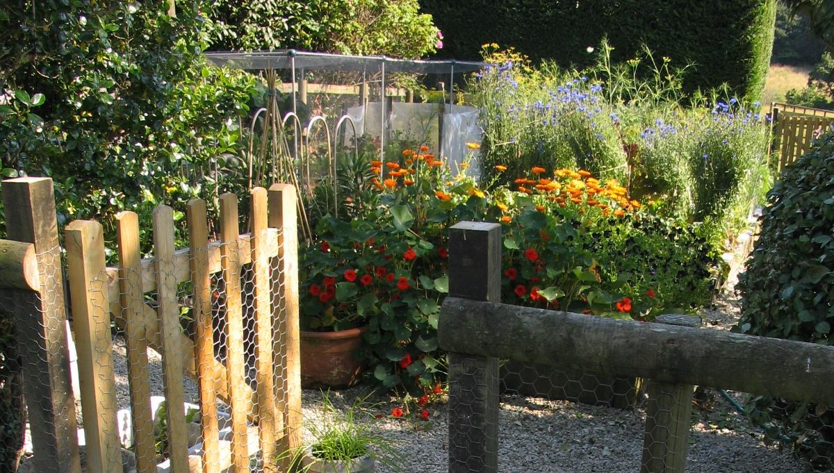 My Kitchen Garden Sweetbabyveg Sweetbabyveg