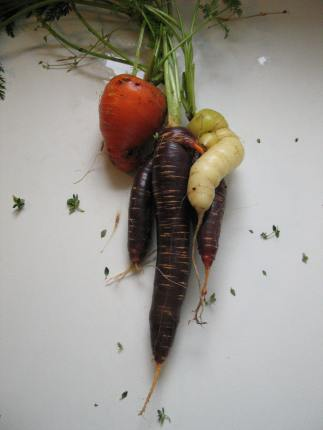 'Purple Haze', 'Yellowstone. and 'Amsterdam Sweetheart' carrots.