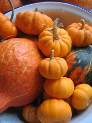 'Jack-be Little' squash; perfect for roasting in the juices around a chicken or a joint.