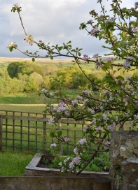 The view from The Meadow Garden and to Dartmoor beyond.