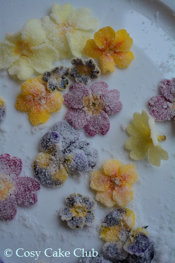 Crystallising Flowers March 2016 049 (2)